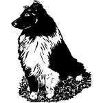 Z1244 Sheltie 6
