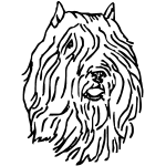 Z1036 Bdf- Head2