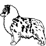Z1246 Shetldm