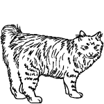 Z2002 American Bobtail