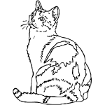 Z2004 American Shorthair