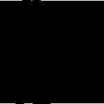 Z1288 BichonFrise1