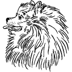 Z1205 Pomeranian Head